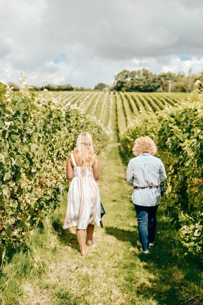 English Oak Vineyard, Dorset.