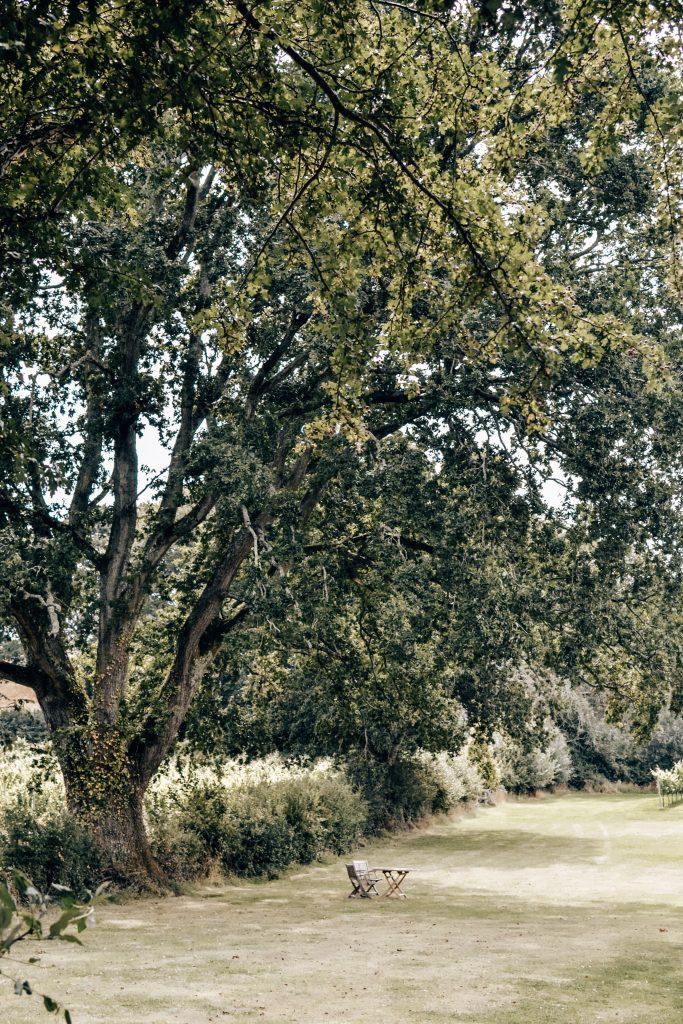 English Oak Vineyard in Dorset